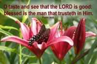 View the image: Butterfly Lilies - Psalm 34:8
