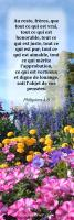 View the image: Fleurs- Philipiens 4:8