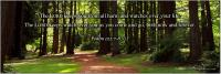 View the image: Psalm 121:7-8 NLT, Trees, wide