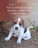 View the image: Cachorro, Mateo 11:28