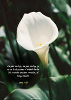 View the image: Lirio, Juan 14:17