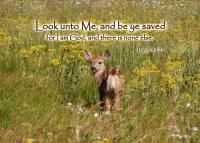 View the image: T02b-Fawn_5x7
