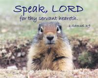View the image: T09-Prairie_Dog-Speak