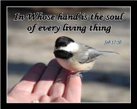 View the image: T13-Chickadee
