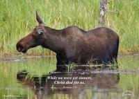 View the image: T17-moose-rom_5_8-5x7