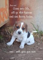 View the image: T18-Puppy-rest_5x7