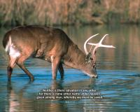 View the image: Buck Drinking, Acts 4:12