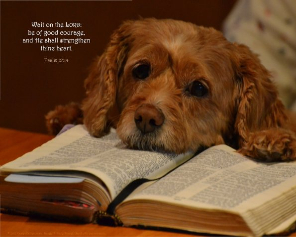 Psalm 27:14, Dog & Bible
