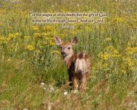 View the image: Fawn, Romans 6:23, 16x20