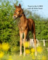 View the image: Foal, Proverbs 3:5