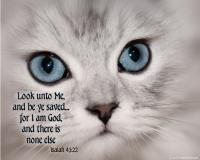 View the image: Kitten face, Isaiah 45:22