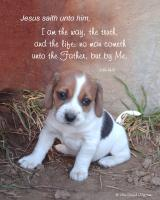 View the image: Puppy, John 14:6