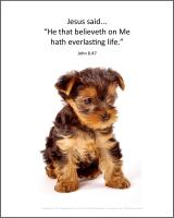 View the image: Terrier Puppy, John 6:47